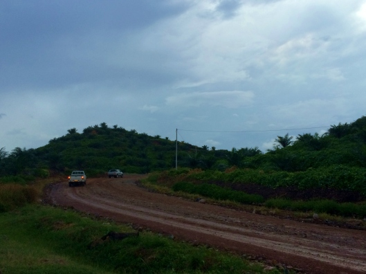 Off-roading in a palm oil plantation.